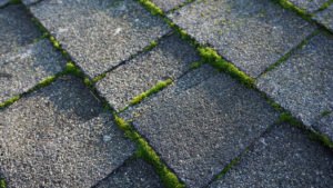 moss removal Gig Harbor, moss treatment Gig Harbor, moss cleaning Gig Harbor, moss removal from roof cost, nw moss treatment, moss removal Seattle, moss cleaning Gig Harbor Washington, clean and clear windows