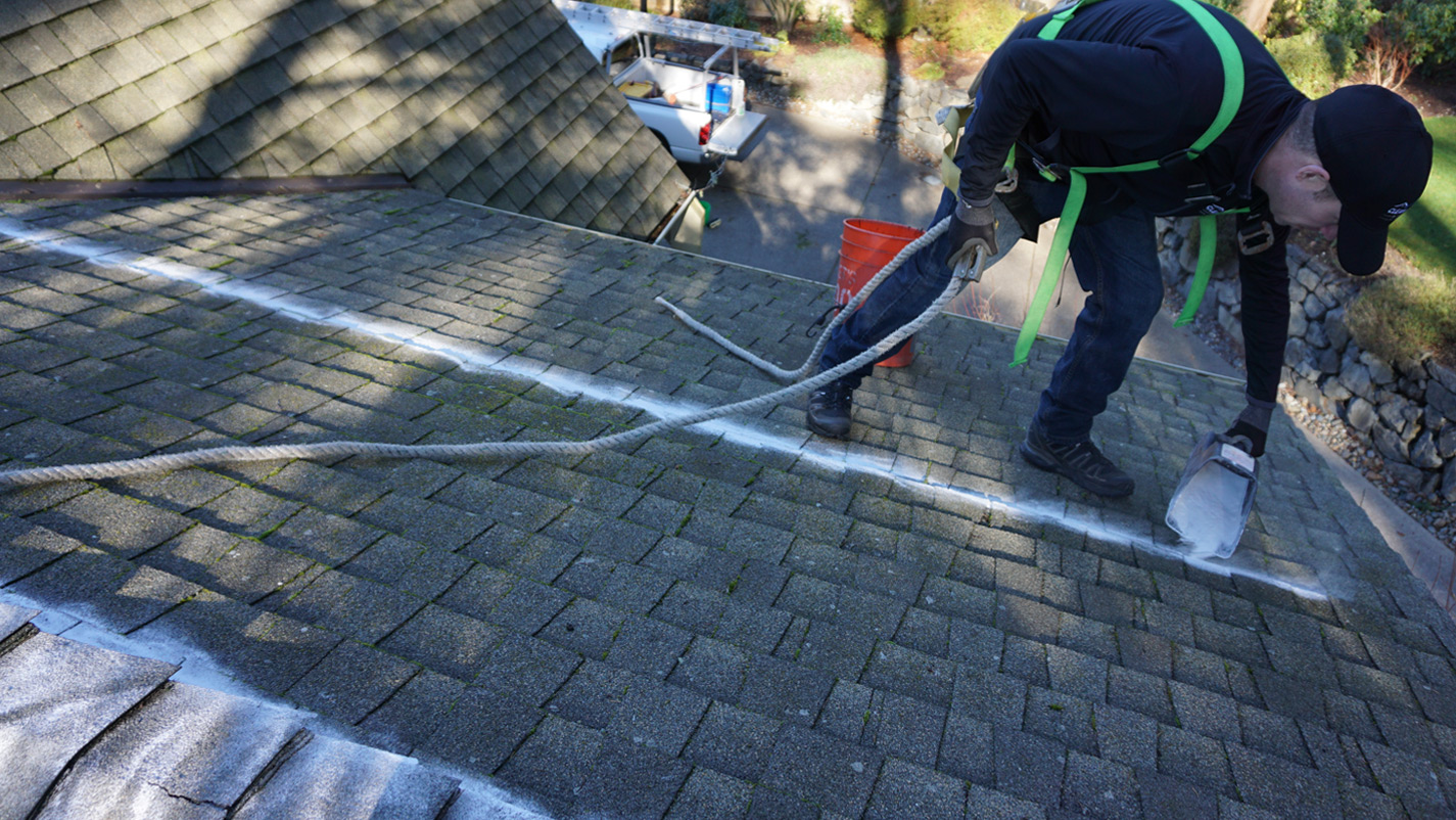 Moss Removal Gig Harbor Moss Treatment Professionals