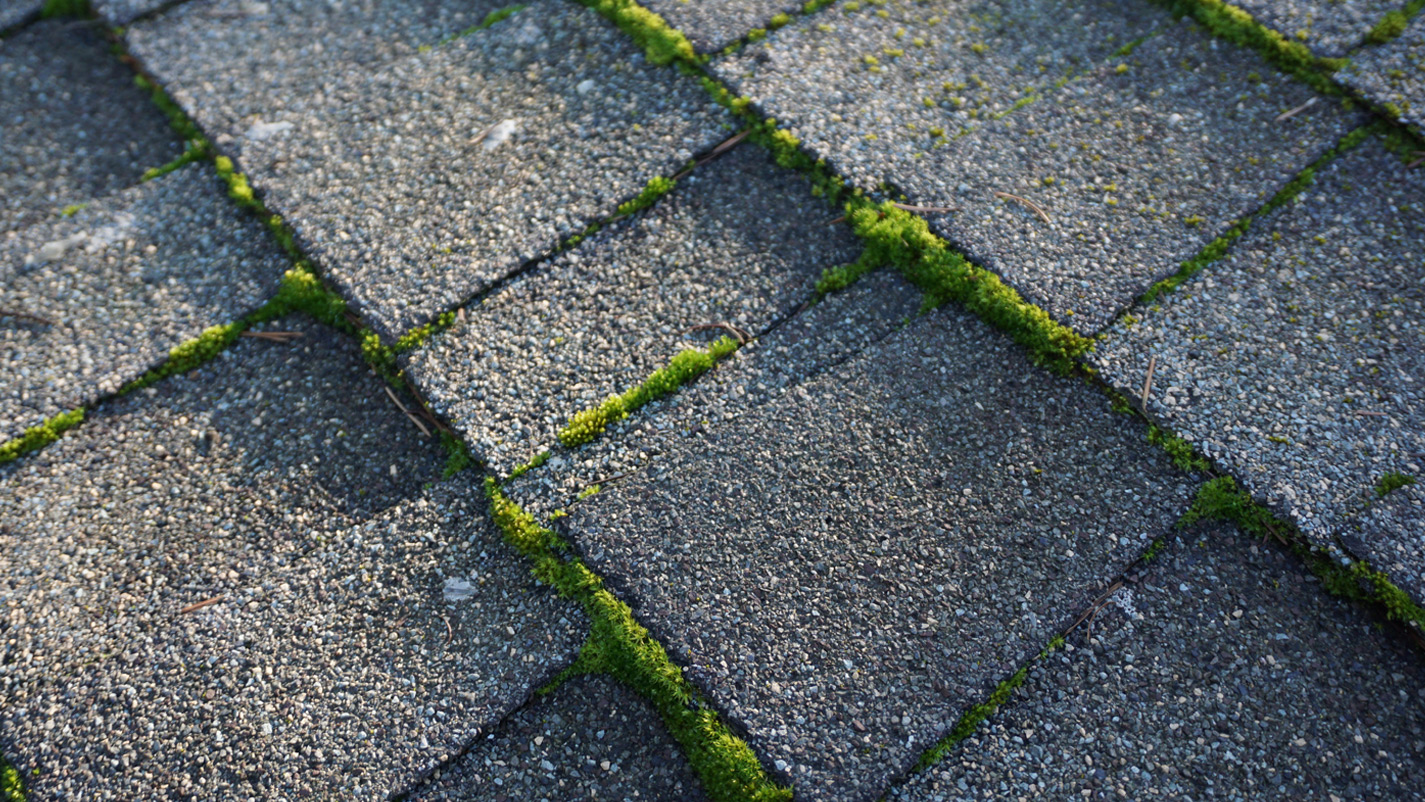 Gig Harbor Roof Cleaning Company Professional Roof